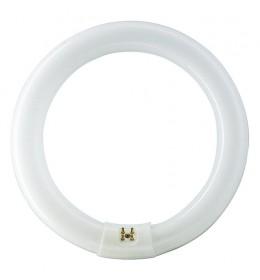 Okrugla fluo cev 32W 6500K G10q T9 circular Philips