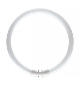 Okrugla fluo cev 22W 3000K 2GX13 TL5 circular Philips