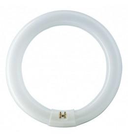 Okrugla fluo cev 22W 4000K G10q T9 circular Philips